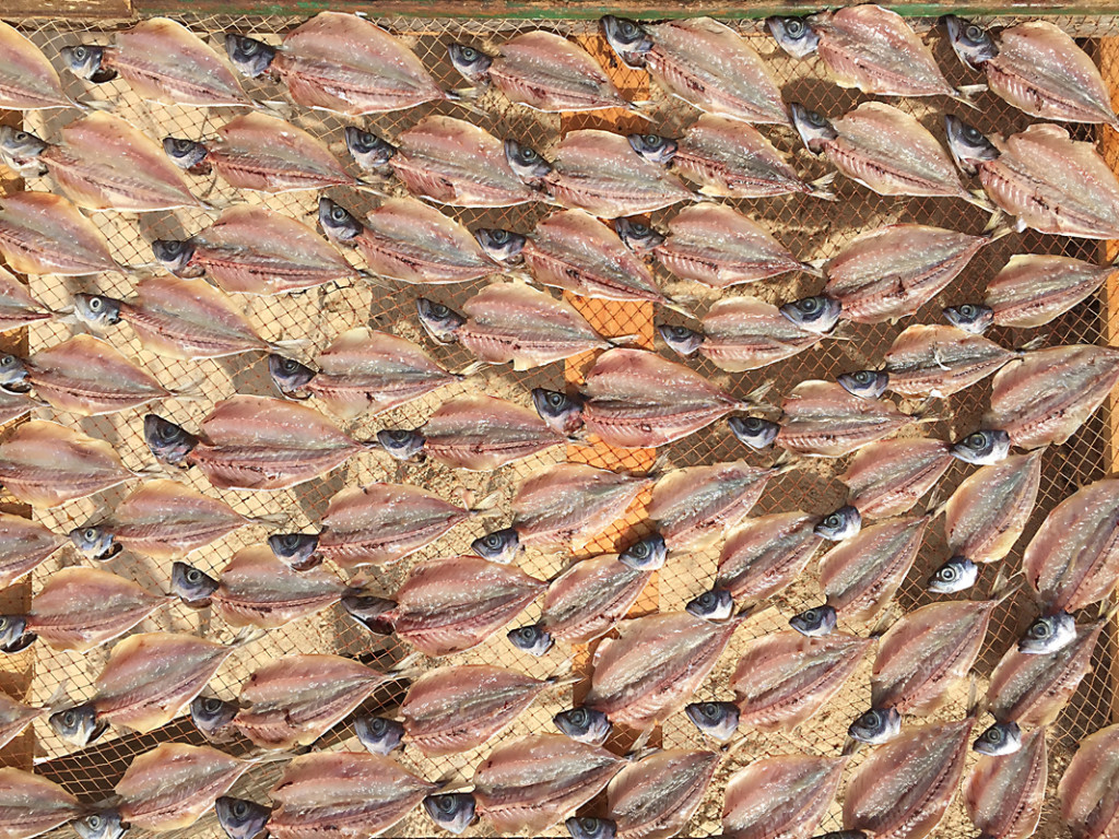 drying fish2